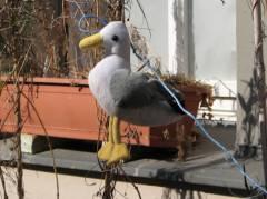 Alle Vögel sind auch schon in der Seelingstraße da