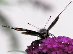 Schmetterling vor der Eosander-Schinkel-Grundschule in Charlottenburg