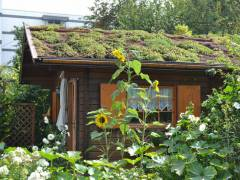 Begrüntes Dach in der Kleingartenanlage / Foto © Kolonie Bundesallee