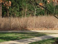 Knallerbsen im Schloßpark Februar 2007