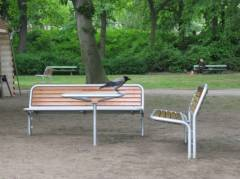 Krähe begutachtet Sitzecke