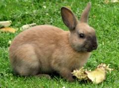 Kaninchen im Garten der Krokodilstation Golzow