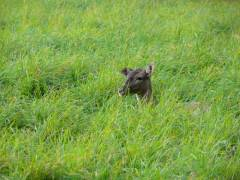 Ruhepause im hohen Gras