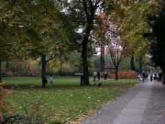 Kastanienlaub Sammelaktion im Schustehruspark