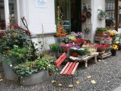 Ein blumiges Plätzchen in der Knobelsdorffstraße