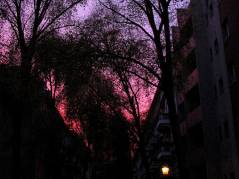 Abendhimmel überm Kiez - 07.11.2008