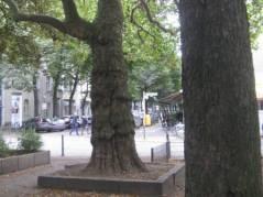 Olivaer Platz mit alten Bäumen