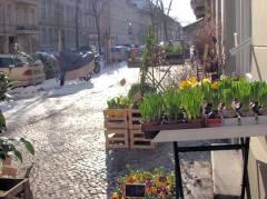 Grüne Aussichten im Osterschnee März/April 3013 - vorerst nur im Blumenladen in der Seelingstraße