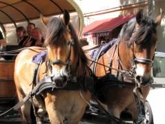 Pferdekutsche in der Neufertstraße - Mai 2011