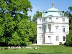Schafe auf der Wiese vor dem Belvedere