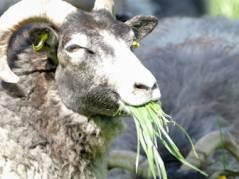 Schloßpark-Gras - welch ein Futter!