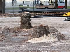 Weitere Bäume wurden gefällt