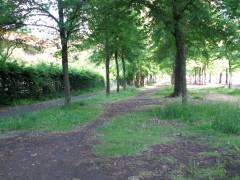 Bänke vor der Kleinen Orangerie wurden entfernt und fehlen immer noch