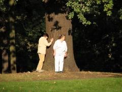 Die Kraft der Sonne und des Baumes nutzen