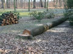 """""""Baumschnittmaßnahmen"""" im Schloßpark - Februar 2008"""