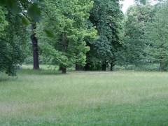 Schloßpark Charlottenburg - Sommer 2008