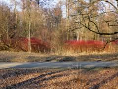 Farben der Natur im Schloßpark Charlottenburg