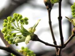 Frühlingsgrün im Schloßpark Charlottenburg