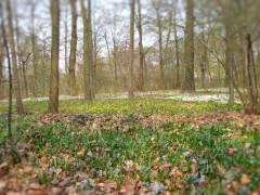 Frühling im Schloßark Charlottenburg 2013