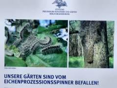 Stiftung Preußische Schlösser und Gärten (SPSG) warnt die Besucher vor dem Eichen-Prozessionsspinner