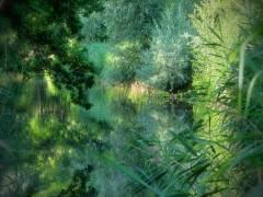 Sommer im Schloßpark Charlottenburg