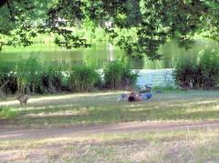 Sommer im Schloßpark Charlottenburg - Entspannung für Mensch und Tier