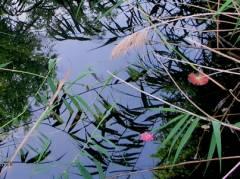 Sommer am Wasser im Schloßpark Charlottenburg
