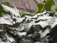 28.12.2006 Erster Schnee im kiez