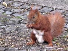 Eichhörnchen zu Gast beim Sommerfest