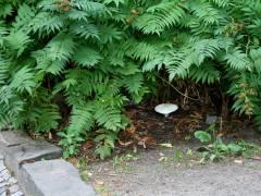 Ein Pilz in seinem schattigen Versteck an der Neufertstraße