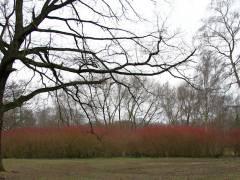 Im Schloßpark Charlottenburg