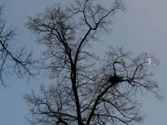 Ein richtig schöner Kiezer Baum - auch im Winter!
