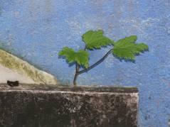 Zartes Grün zwischen Stein und Beton
