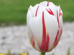 Blütenpracht im Schloßpark - Frühling 2011