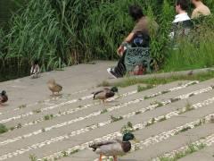 Mensch und Tier, Wasser und viel Grün im Schloßpark Charlottenburg