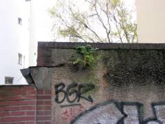 Auch an einer Mauer ...