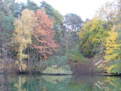 Herbst am Sausuhlensee