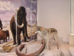 """Naturwissenschaftliche Sammlung - Ausstellung """"Eiskalt - die Eiszeit in Berlin"""""""
