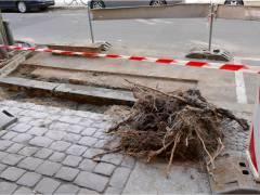 Baum- und Straßenarbeiten in der Neufertstraße