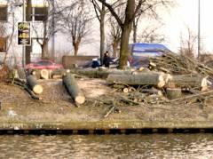 Baumfällungen am Spreeufer Tegeler Weg in Charlottenburg (Januar 2017)