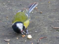 Vogel im Schloßpark (auch im Kiez)