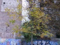 Walnussbaum im Ziegenhof