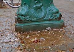 Wasser(-Pumpe) in der Nehringstraße