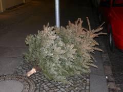 Weihnachtsbaum im Februar