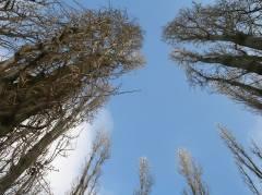 Bäume am Klausenerplatz