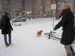 Winter im Kiez - schier aus dem Häuschen
