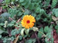 Blüte im Dezember am Klausenerplatz