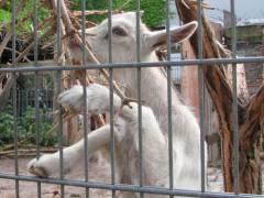 Nachwuchs im Ziegenhof