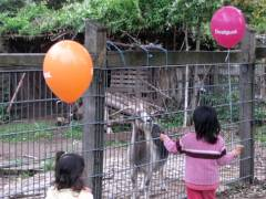 Besuch auf dem Ziegenhof (mit Luftballon)