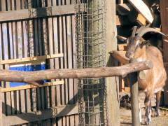 Neue Nachbarn bei den Ziegen